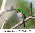 cuban tody | Shutterstock . vector #595046165