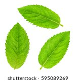 fresh raw mint leaves isolated | Shutterstock . vector #595089269