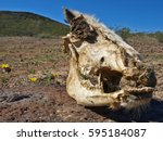 The Skull Of A Dead Horse Found ...