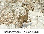 hind in winter   Shutterstock . vector #595202831
