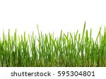 Fresh Green Grass  Sprout Of...