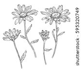 Set Of Drawn With Ink Daisies...