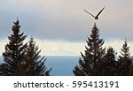 Bald Eagle Flying With Mount...