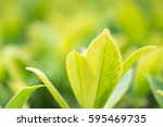 close up nature view of green... | Shutterstock . vector #595469735