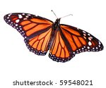 Stock photo monarch butterfly isolated on white 59548021