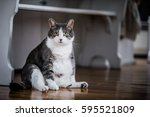 Stock photo funny fat cat sitting in the kitchen and probably waiting for some more food 595521809