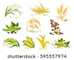 cereals icons of grain plants.... | Shutterstock .eps vector #595557974