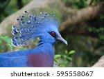 Beautiful Bird Macro