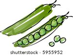 sketch of peas in a pod hand... | Shutterstock .eps vector #5955952
