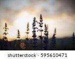 silhouette of grass flower on...   Shutterstock . vector #595610471