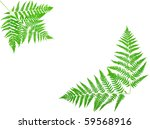 young green fern leaf against... | Shutterstock . vector #59568916