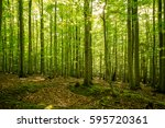spring in the harz book forest | Shutterstock . vector #595720361