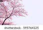selective focus cherry blossom... | Shutterstock . vector #595764125
