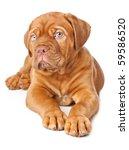 Puppy Of Dogue De Bordeaux ...