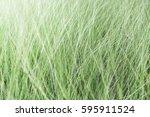 background of outdoor... | Shutterstock . vector #595911524