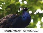 phesant | Shutterstock . vector #596050967