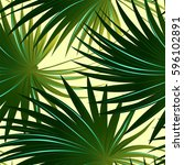 tropical cabbage palm tree... | Shutterstock .eps vector #596102891