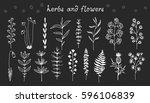 botanical doodle illustration ...   Shutterstock .eps vector #596106839