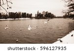 Gulls Flying Over The Lake Wit...