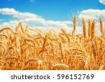 gold wheat field and blue sky. | Shutterstock . vector #596152769