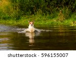 dog wading across river at ford | Shutterstock . vector #596155007
