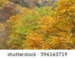 Small photo of Autumn japanese horse chestnut leaves(Aesculus turbinata) in Minakami, Gumna