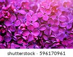 spring flowers   blooming lilac ... | Shutterstock . vector #596170961
