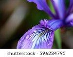 Purple Flower With Regions Of...