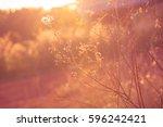 grass fields at sunset | Shutterstock . vector #596242421