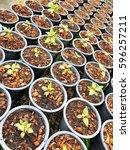 seeding nursery for flower... | Shutterstock . vector #596257211