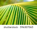 palm leaves texture eco...   Shutterstock . vector #596307065