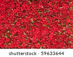 Stock photo a wall of red roses background 59633644