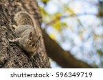 Little Big Squirrel In Hyde...