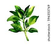 branch of fresh geen basil... | Shutterstock . vector #596353769