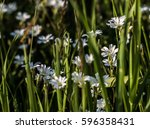beautiful flower..   Shutterstock . vector #596358431