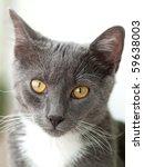cat portrait | Shutterstock . vector #59638003