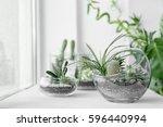 mini succulent garden in glass... | Shutterstock . vector #596440994