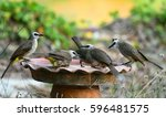 A Group Of Five Yellow Vented...