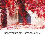 red vibrant ivy creeps in an... | Shutterstock . vector #596505719