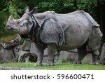 indian rhinoceros  rhinoceros... | Shutterstock . vector #596600471