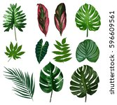 tropical leaves of palm tree.... | Shutterstock .eps vector #596609561