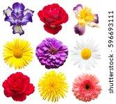 Collection Beautiful Iris Dandelion Gerbera - Fine Art prints