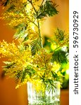 Small photo of Flowers mimosa