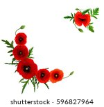 Frame Of Red Poppies  Papaver...