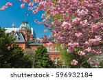 pink cherry blossom with former ... | Shutterstock . vector #596932184