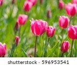 spring flowers series ... | Shutterstock . vector #596953541