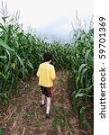 Boy Inside Corn Maze Amid Tall...