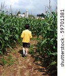 Boy Inside Corn Maze  Walking...