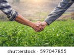 Small photo of Two farmer shaking hands on potato leaves When sunset.