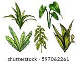 tropical leaves  dense jungle.... | Shutterstock .eps vector #597062261
